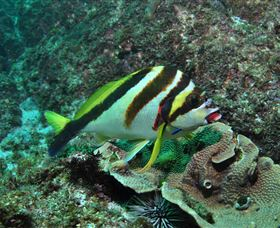 Palm Beach Reef Dive Site