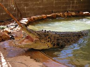 Wyndham Zoological Gardens and Crocodile Park - Accommodation Daintree