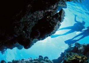 Deep Sea Divers Den - Accommodation Daintree